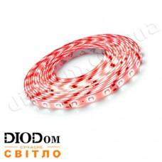Светодиодная лента Biom Standart 4,8W 60LED 3528 IP65 красный